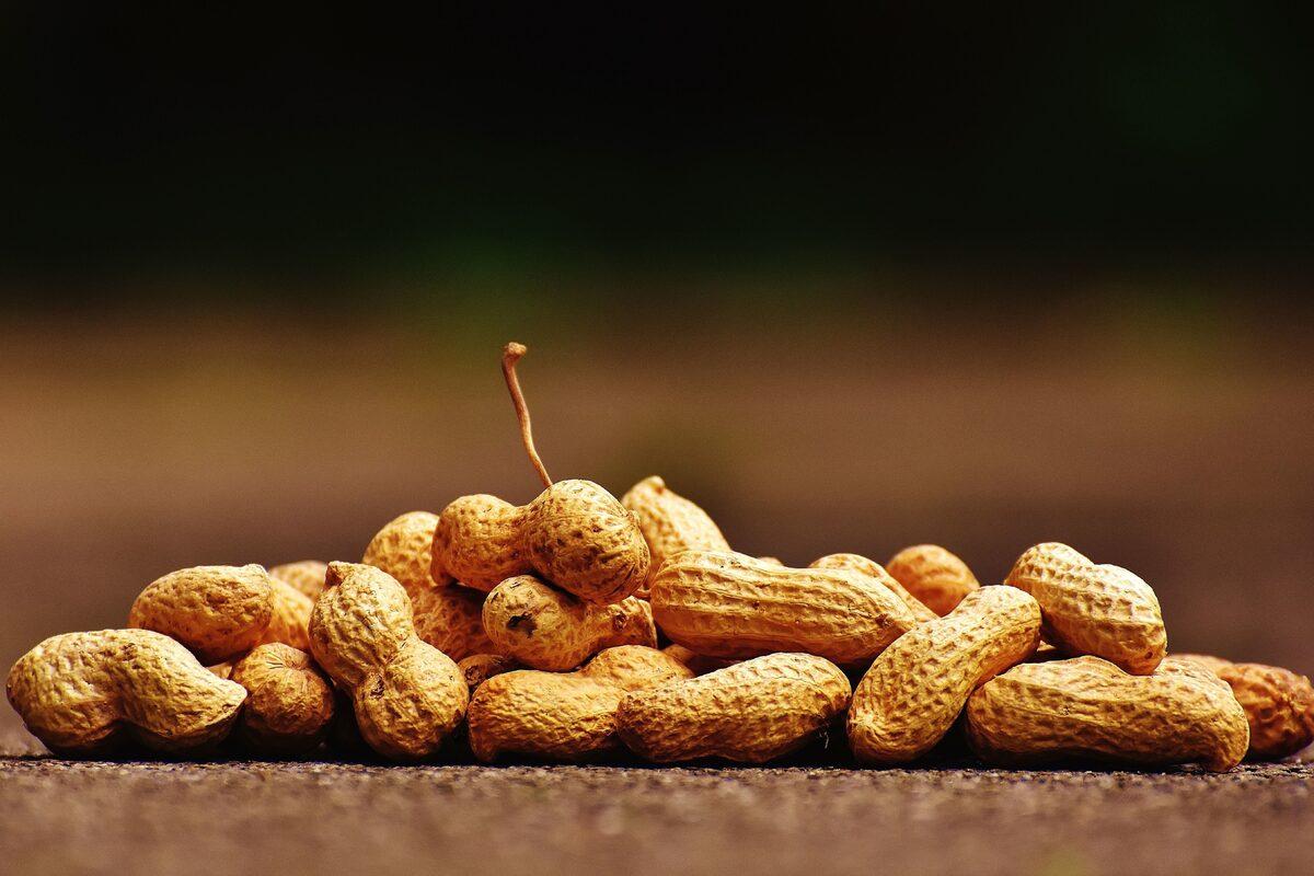 Los cacahuetes son legumbres nutritivas