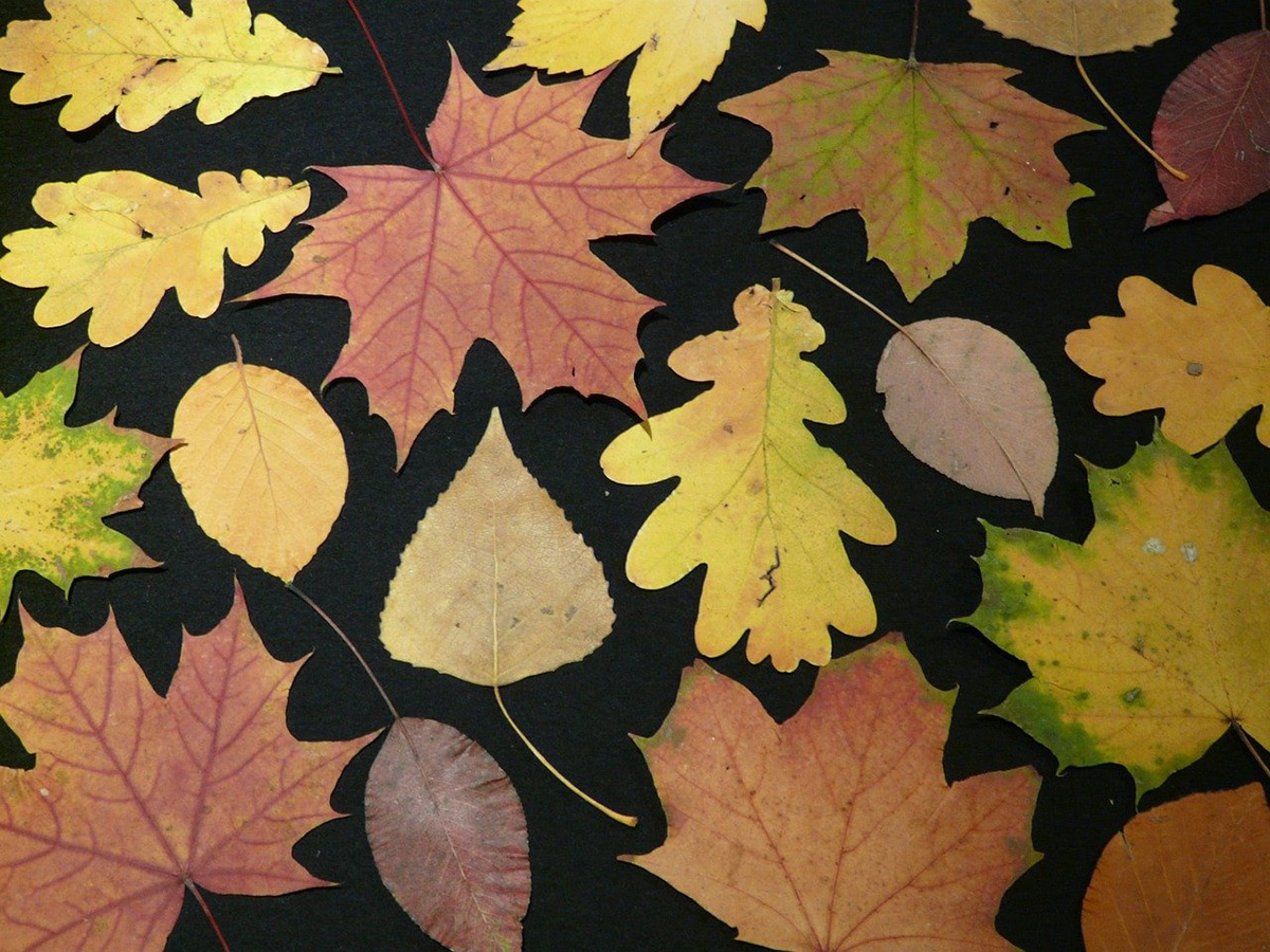 Existen diferentes tipos de herbarios