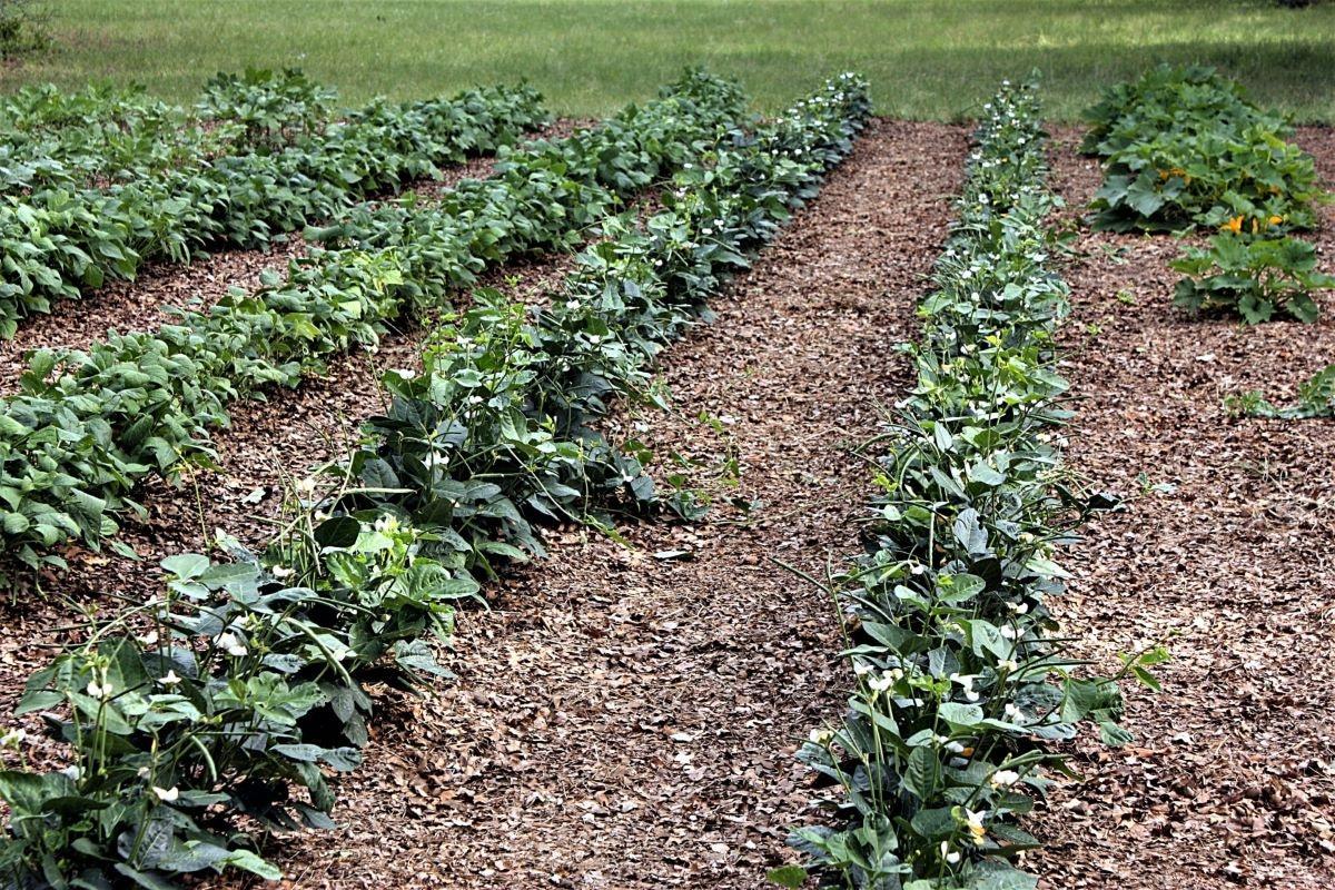 Un huerto es un lugar para tener plantas comestibles