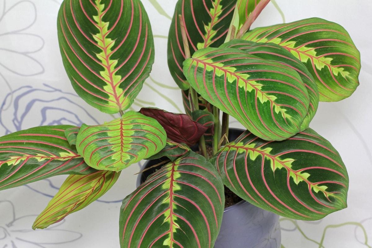 planta de la selva tropical de interiores