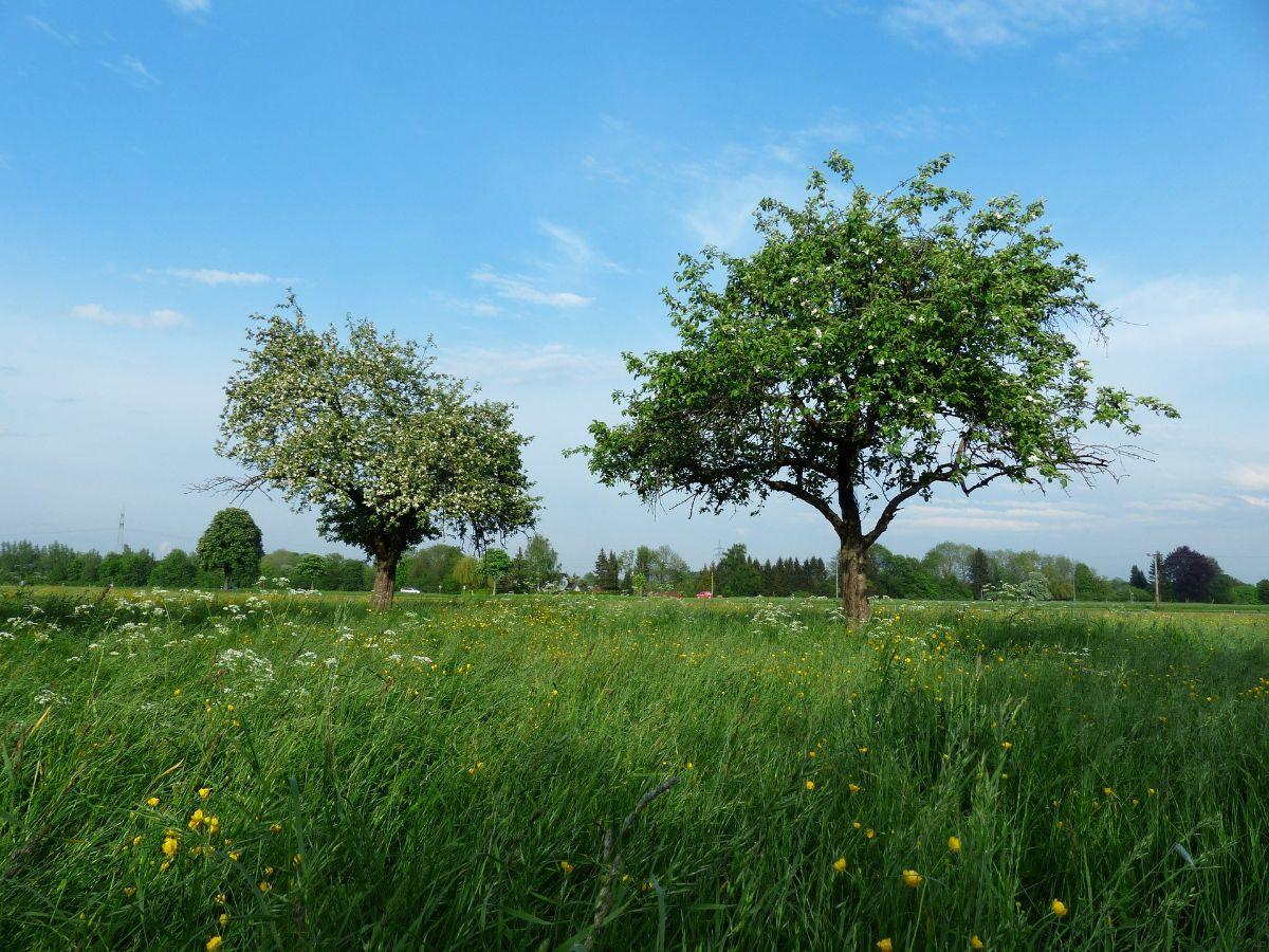 ¿Qué distancia debe haber entre árboles frutales?