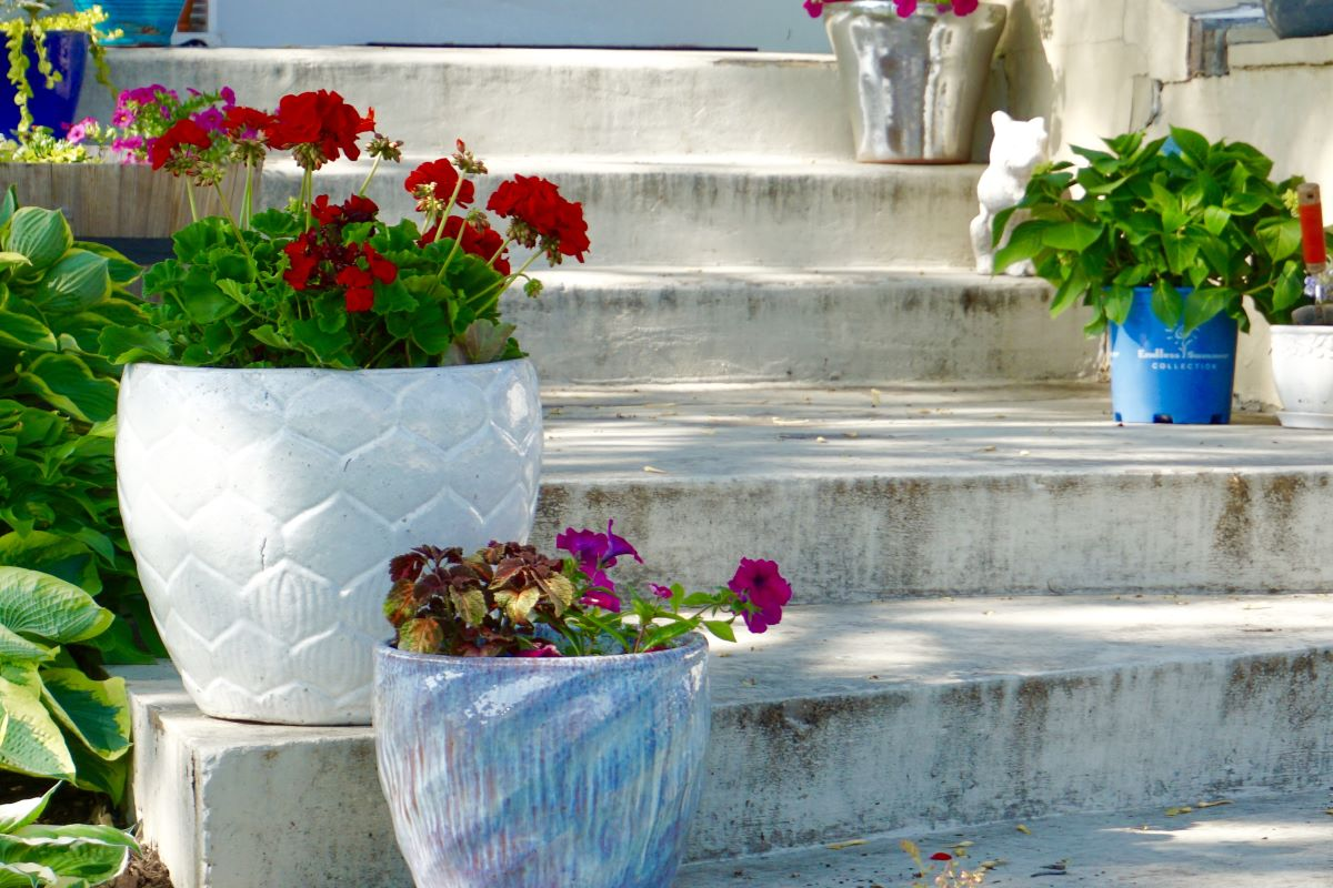 Las plantas en macetas de abonan en primavera y en verano