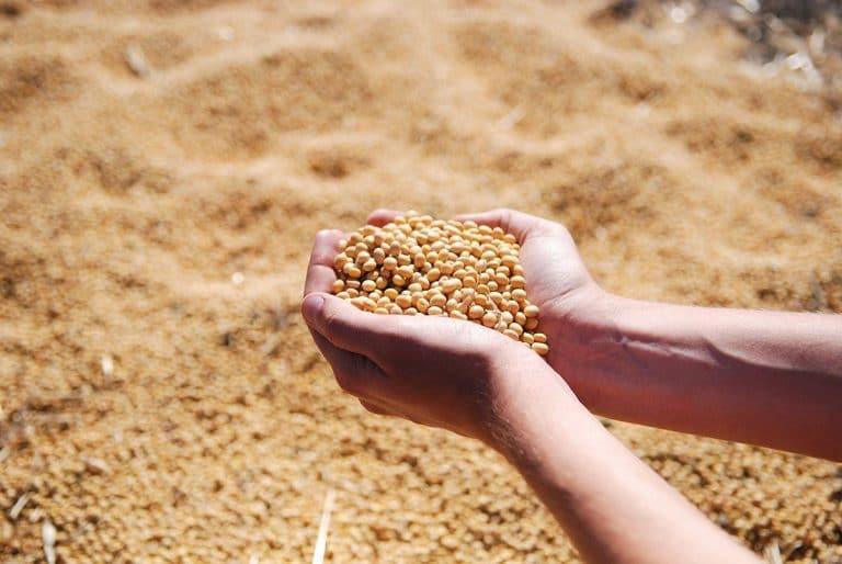 Los Rhizobium aportan muchos beneficios a la agricultura y al medio ambiente