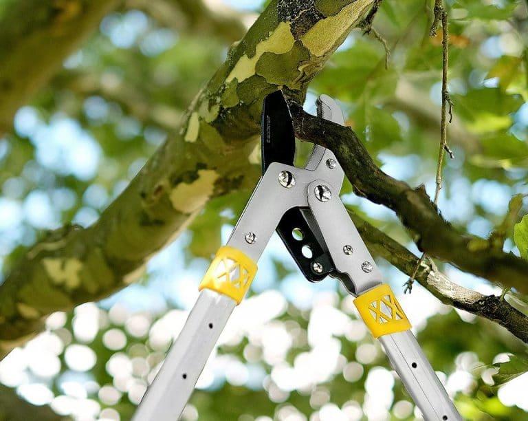 Con el cortarramas telescópico podemos evitar el uso de escaleras en el jardín