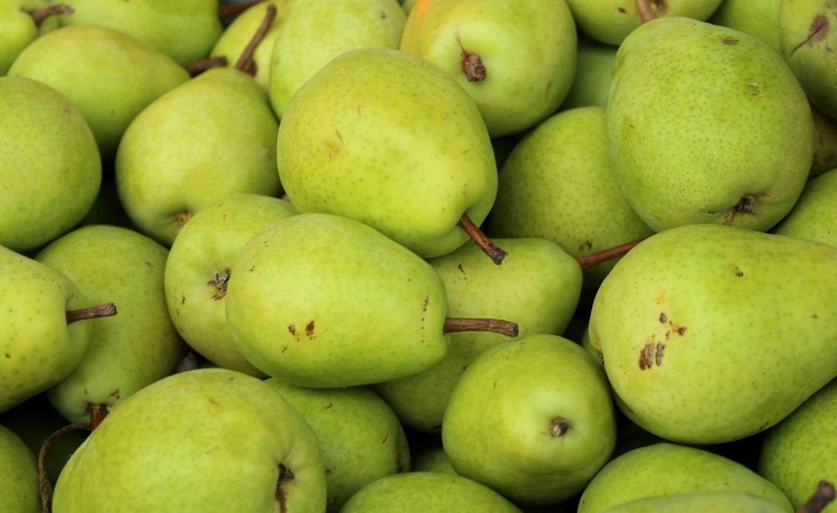 ¿Cuál es la temporada de la pera de agua?