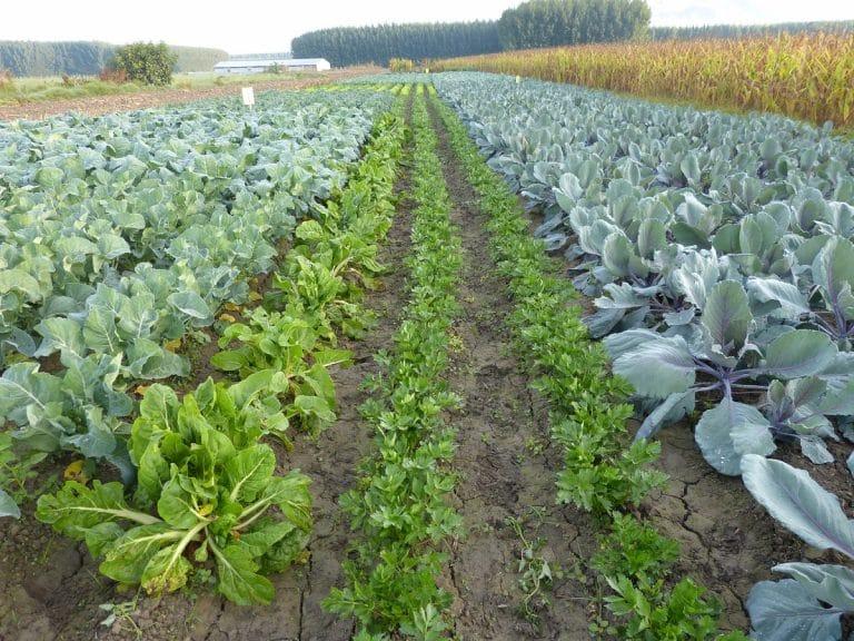 agricultura de policultivo