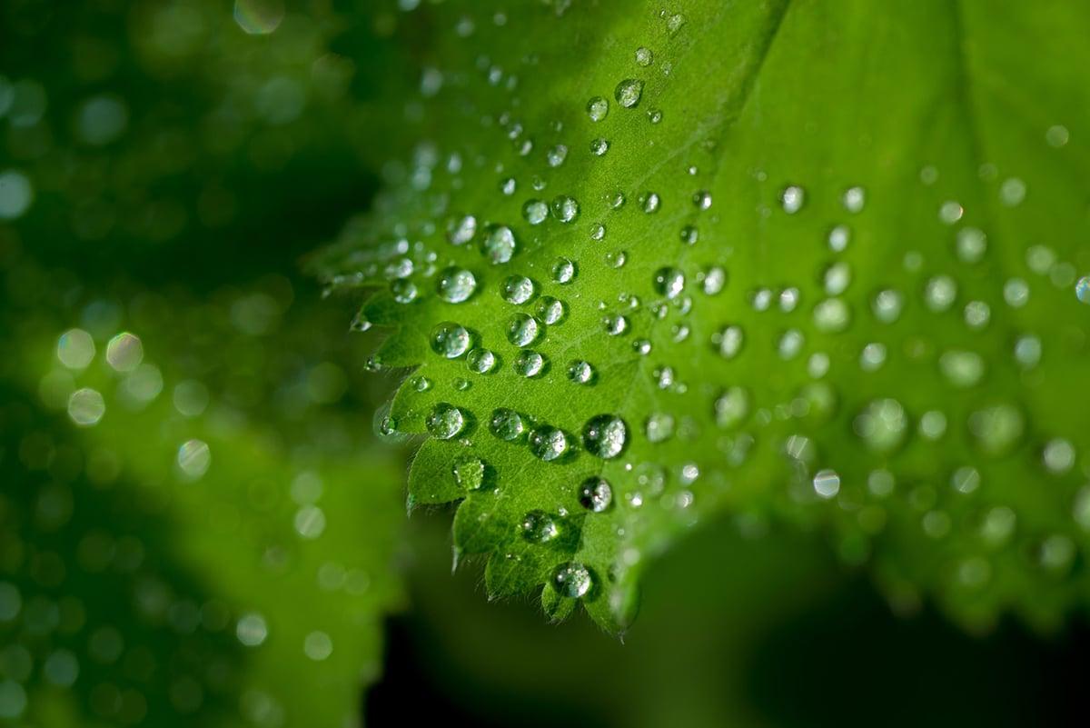 Las plantas se alimentan mediante la fotosíntesis