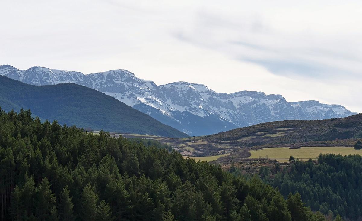 El Parc Natural Cadí-Moixeró alberga una tercera parte de todas las especies vegetales de Cataluña