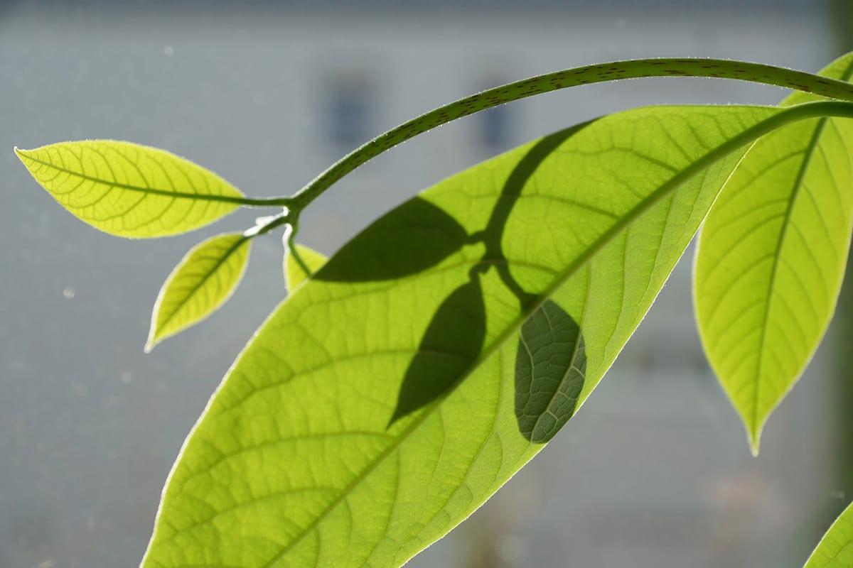 Las células de las plantas tienen sus propias estructuras y componentes