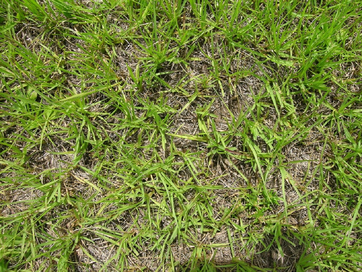 cesped para recuperar suelos degradados