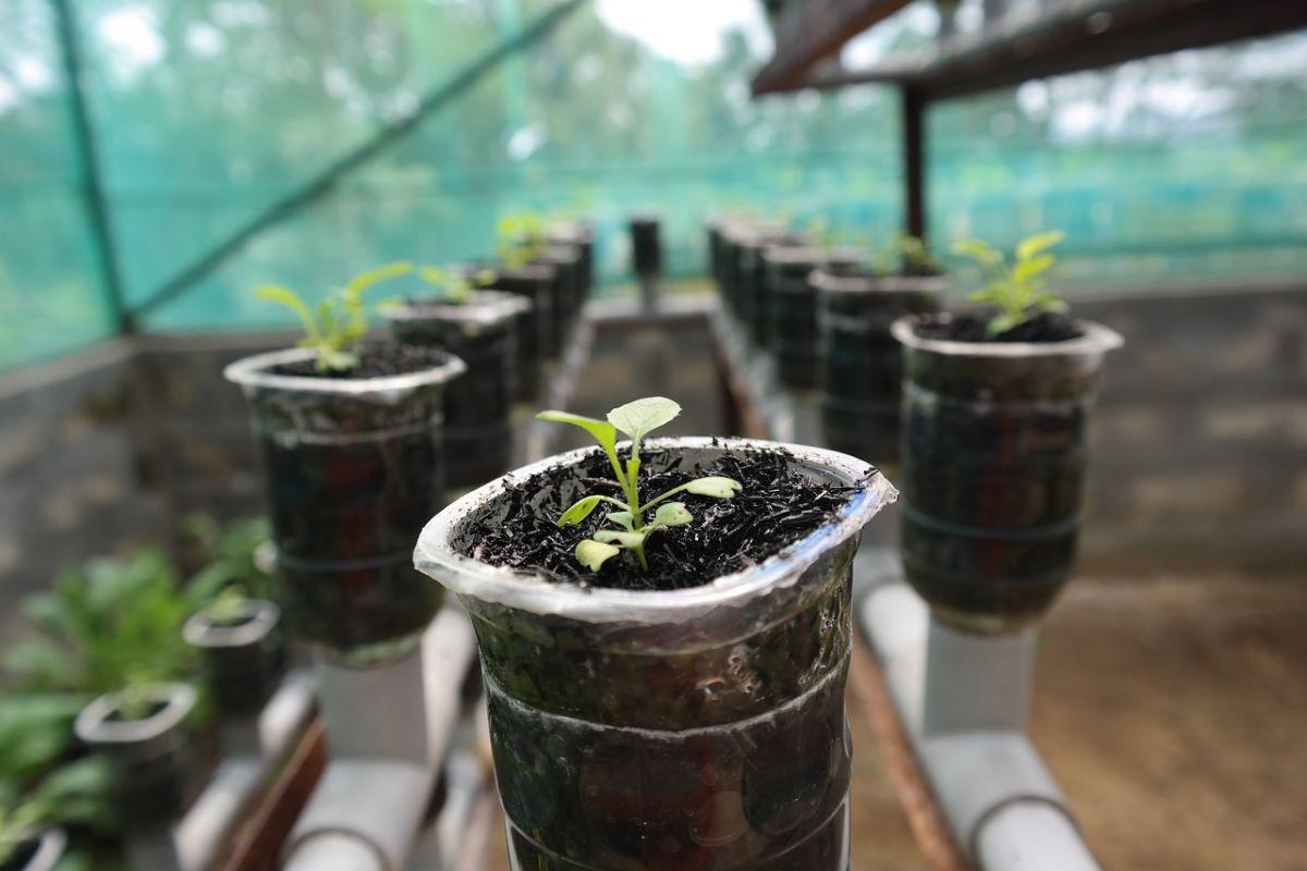 Son muchas las plantas que se cultivan en hidroponia