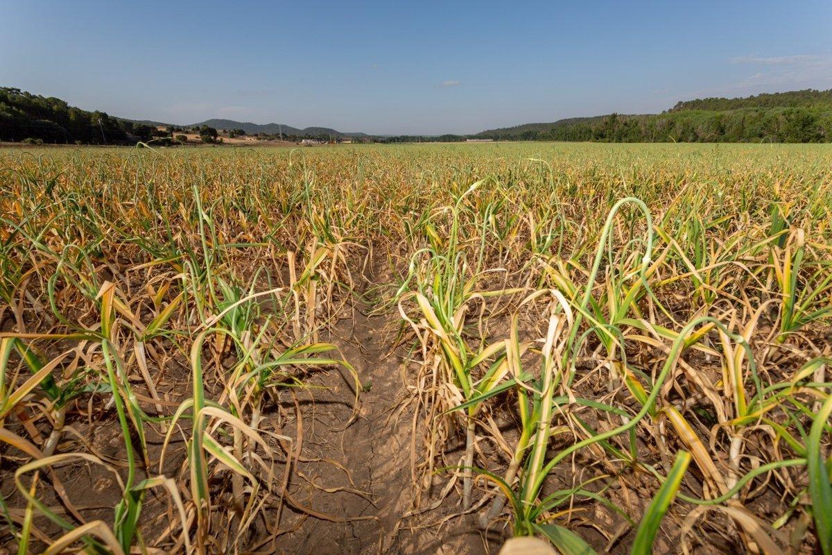 cultivos variados para evitar la erosion del suelo