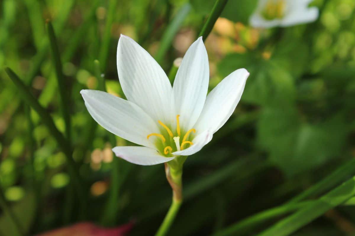Las flores blancas pequeñas tienen un gran valor ornamental