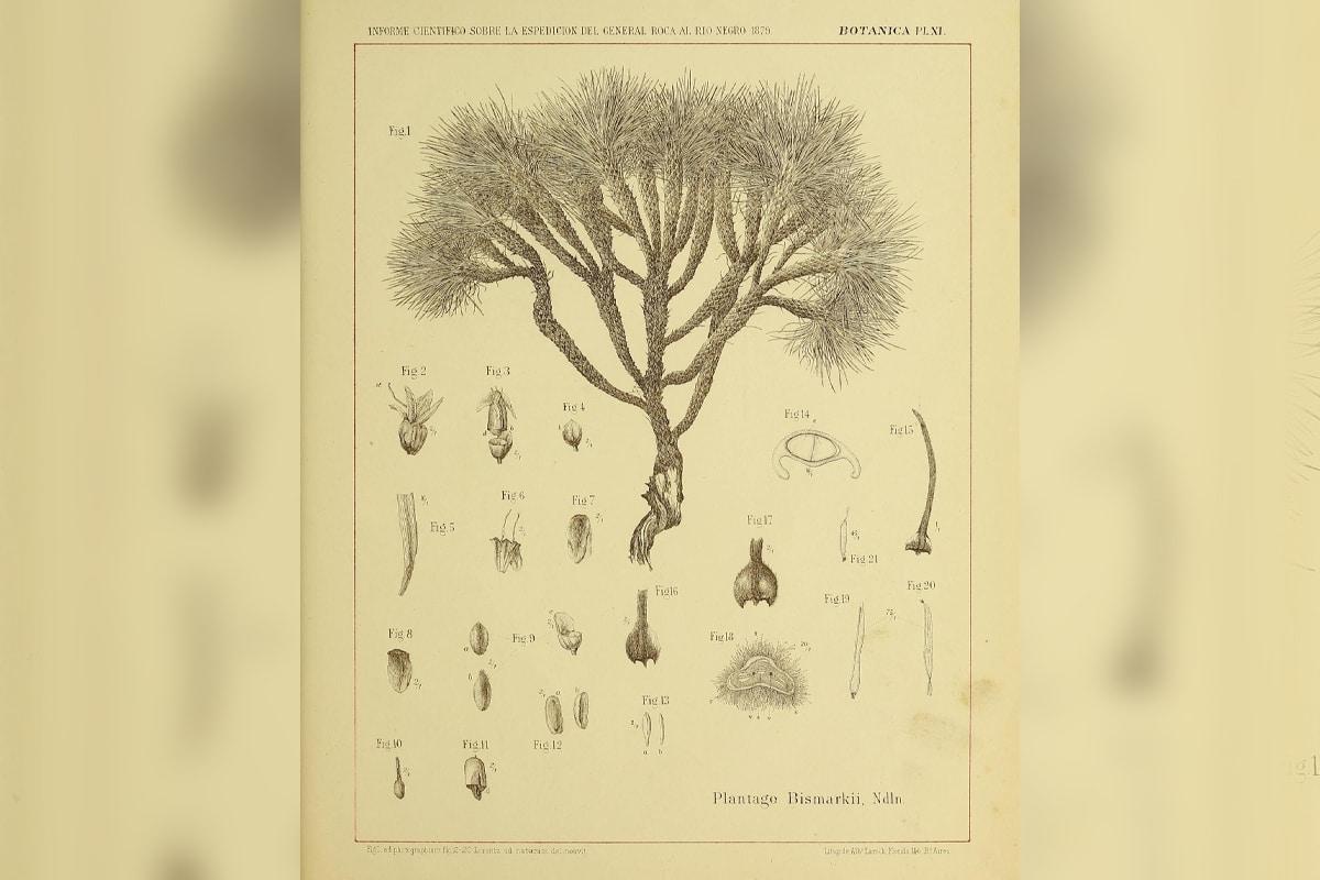 Usando la ilustración botánica podemos seleccionar y enfatizar diversos elementos importantes