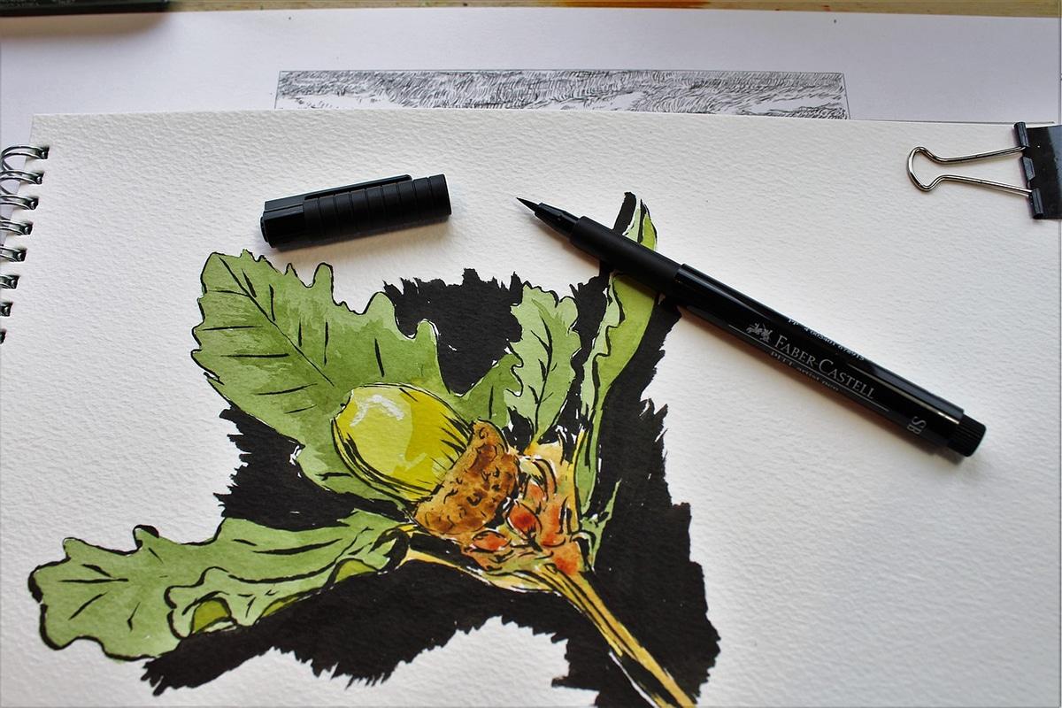 La ilustración botánica es un dibujos muy detallados de las plantas y sus componentes