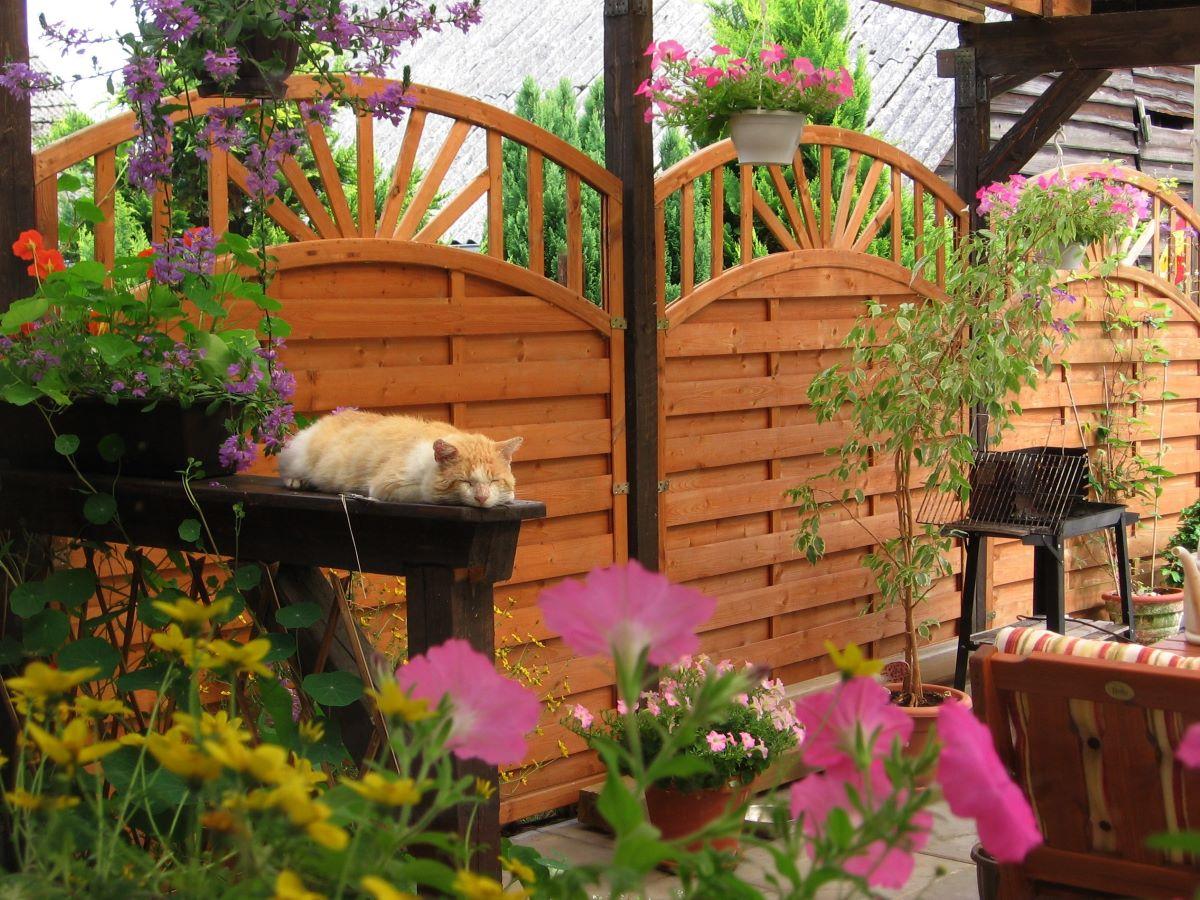 Un jardín urbano puede ser ideal para los gatos