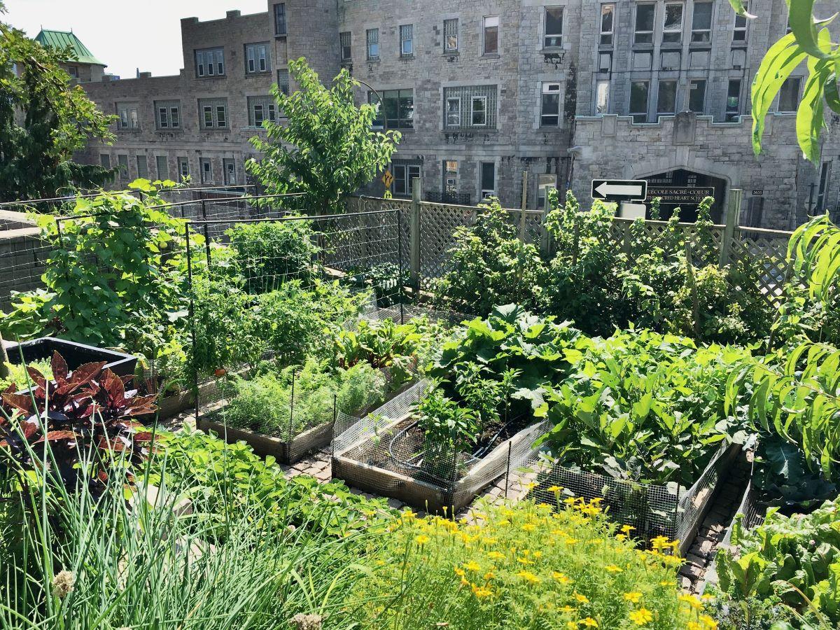 Un jardín urbano puede ser de cualquier tamaño