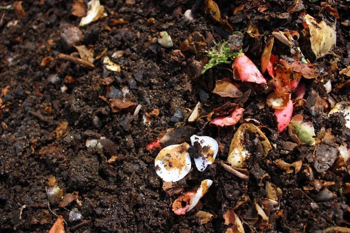 materia organica en el suelo