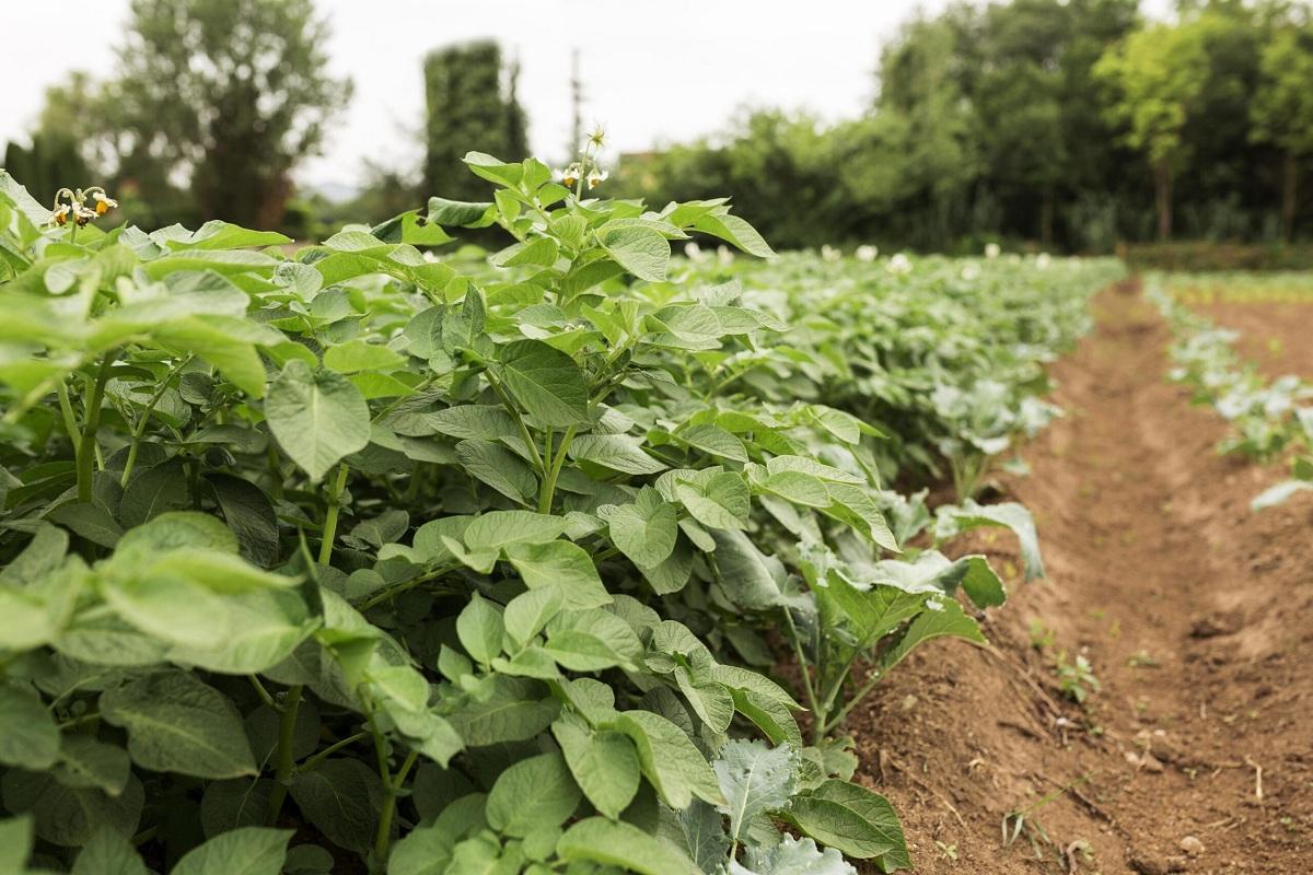 nutrientes para el suelo