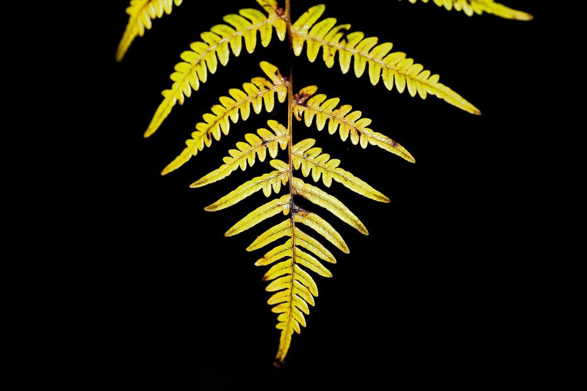 La pared celular vegetal da rigidez y define la estructura de la planta