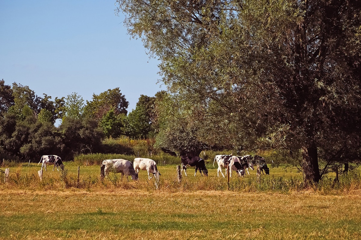 El pastor eléctrico ayuda a proteger los terrenos