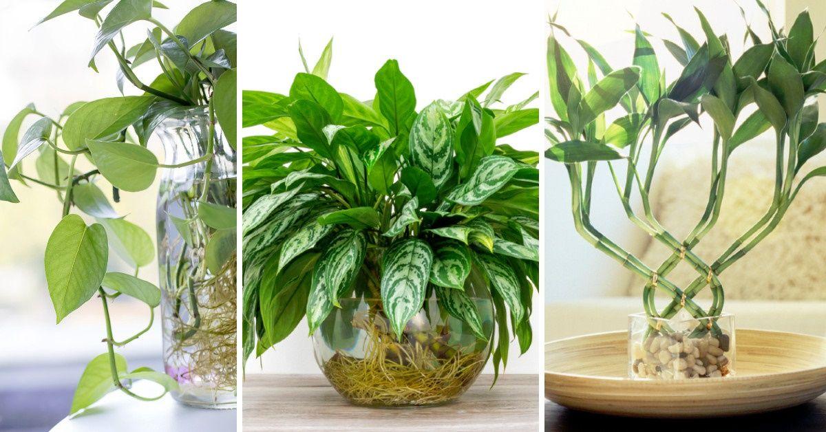 ¿Cuáles son las plantas que crecen en el agua?