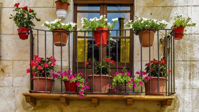 Hay muchas plantas que puedes poner en un balcón soleado