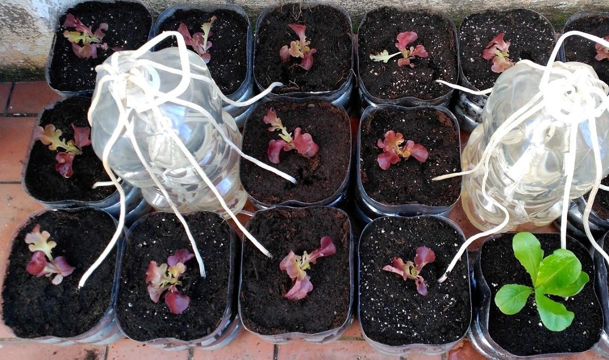 plantas que necesitan humedad