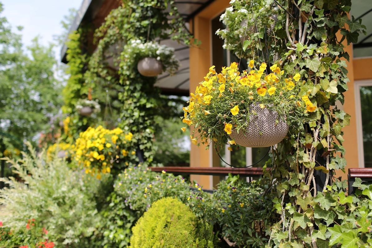 Las plantas colgantes dan mucho juego a un jardín urbano