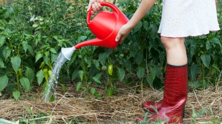 que es la agricultura y caracteristicas