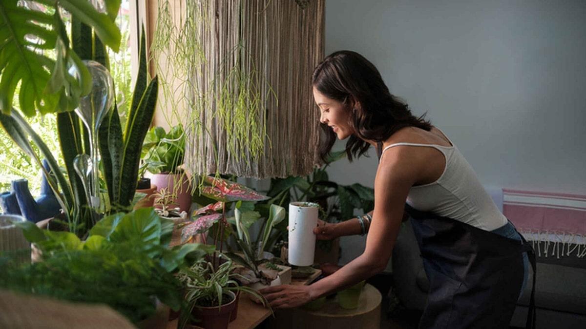 regar plantas en verano