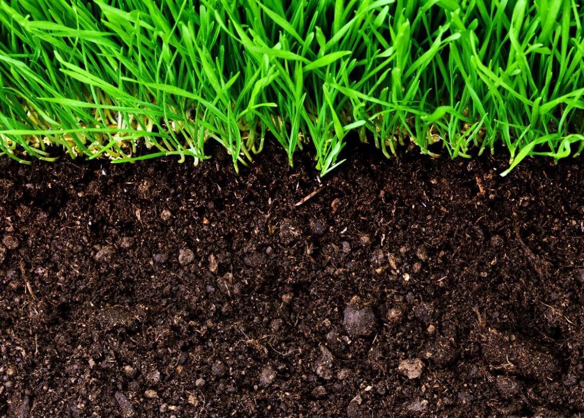 El suelo es donde crecen las raíces