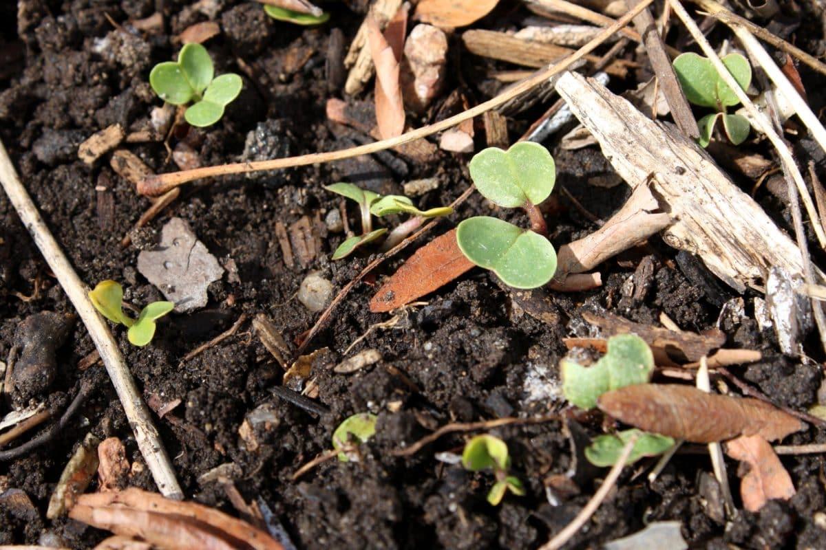El suelo es importante para las plantas