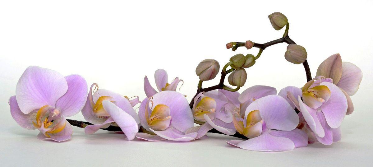 Cómo cuidar una orquídea dentro de casa