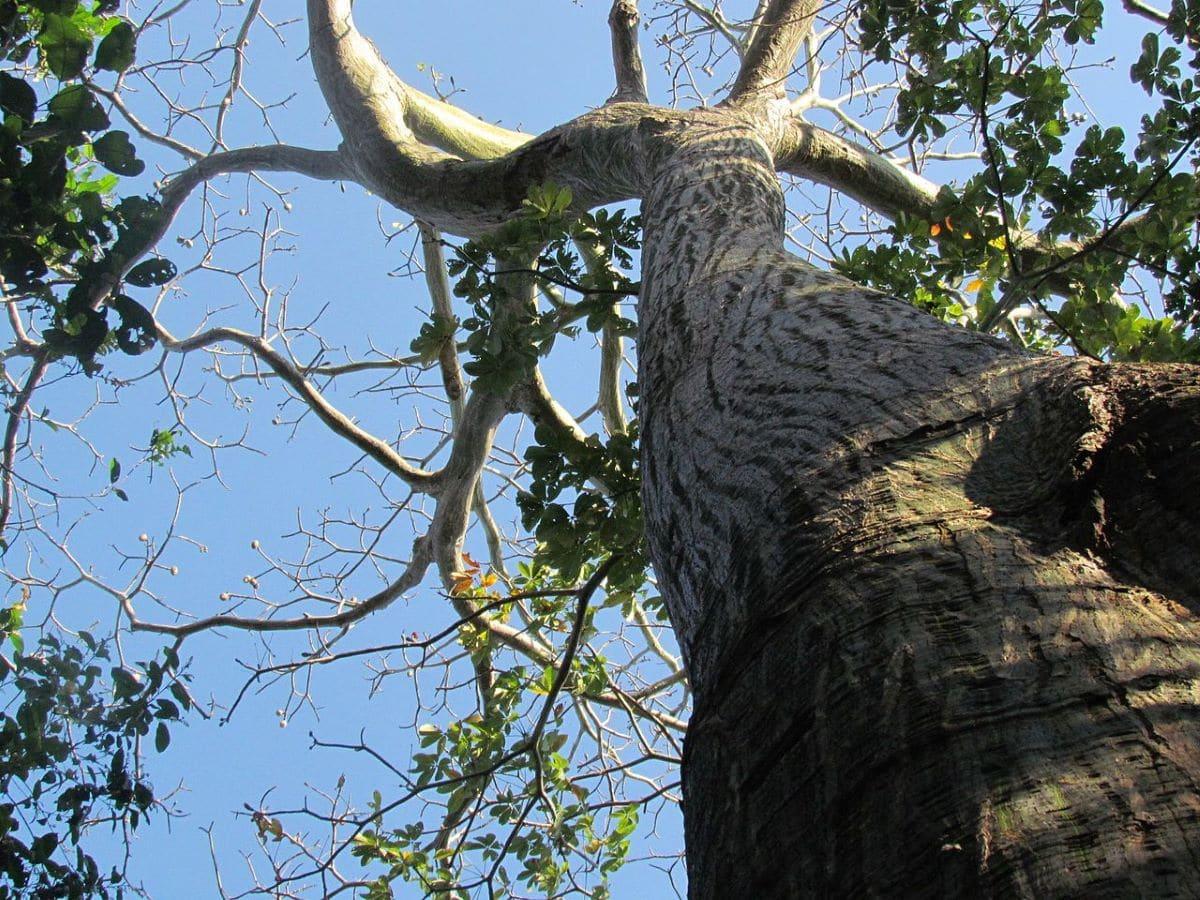 Hay muchos árboles exóticos que se pueden cultivar en un jardín