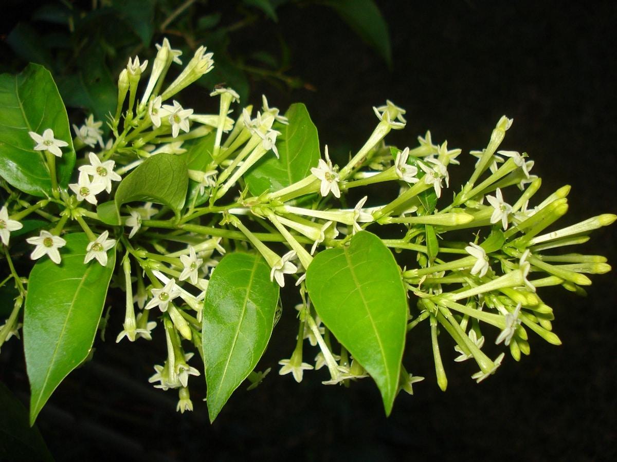 aroma de las plantas