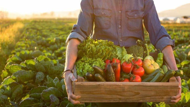 asociacion de cultivos ventajas