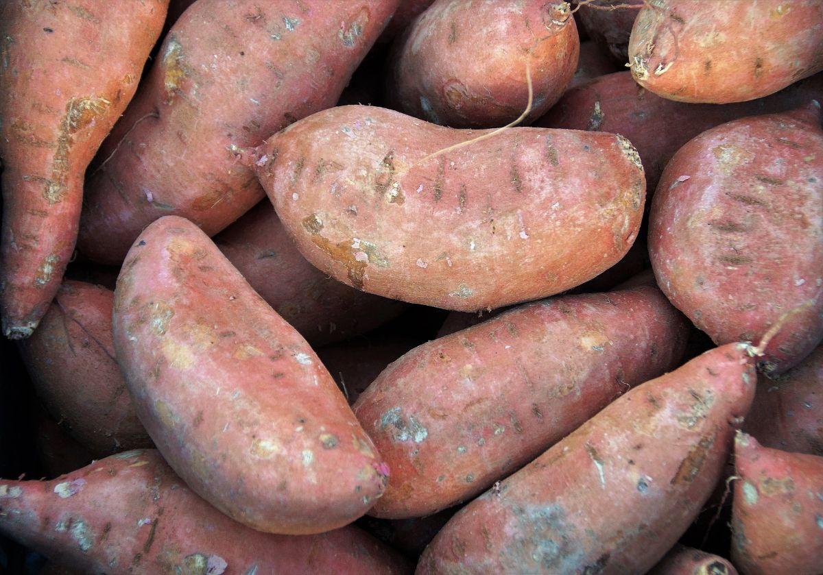 Cuándo y cómo se deben sembrar las batatas