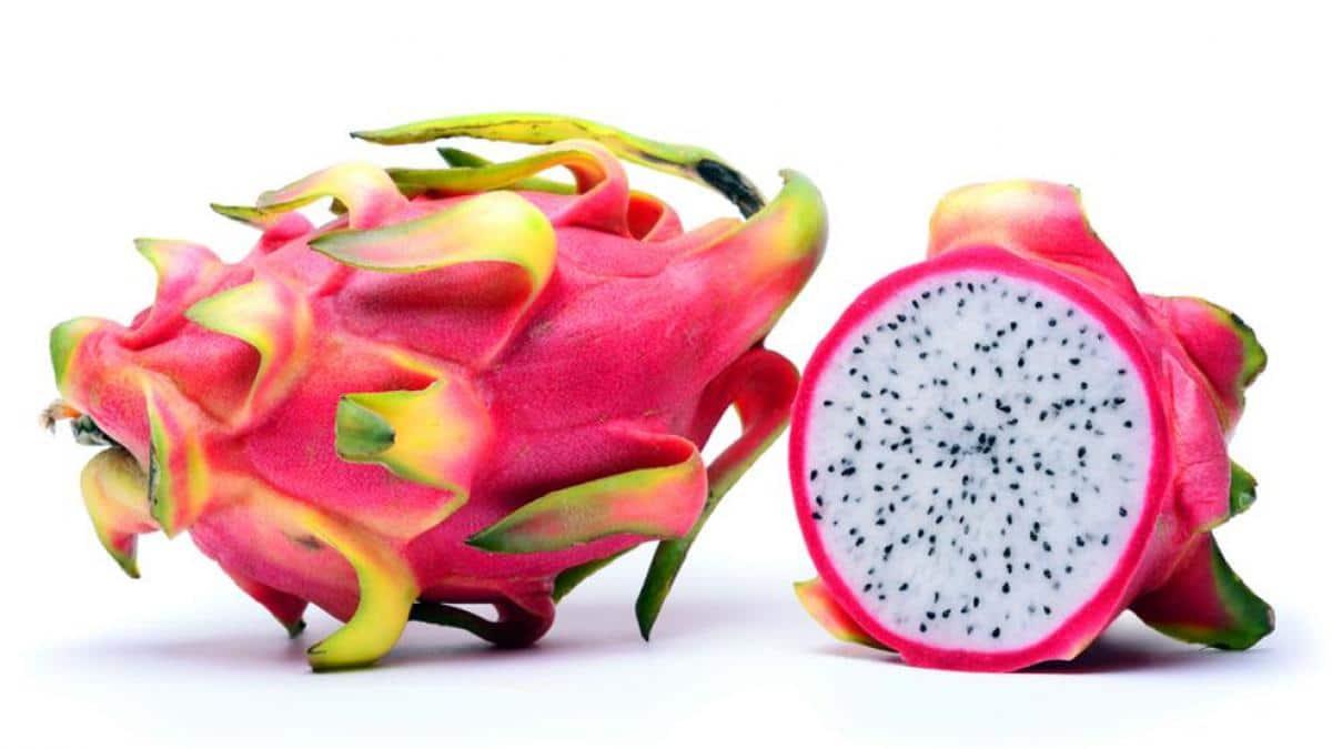 cultivo de la pitaya