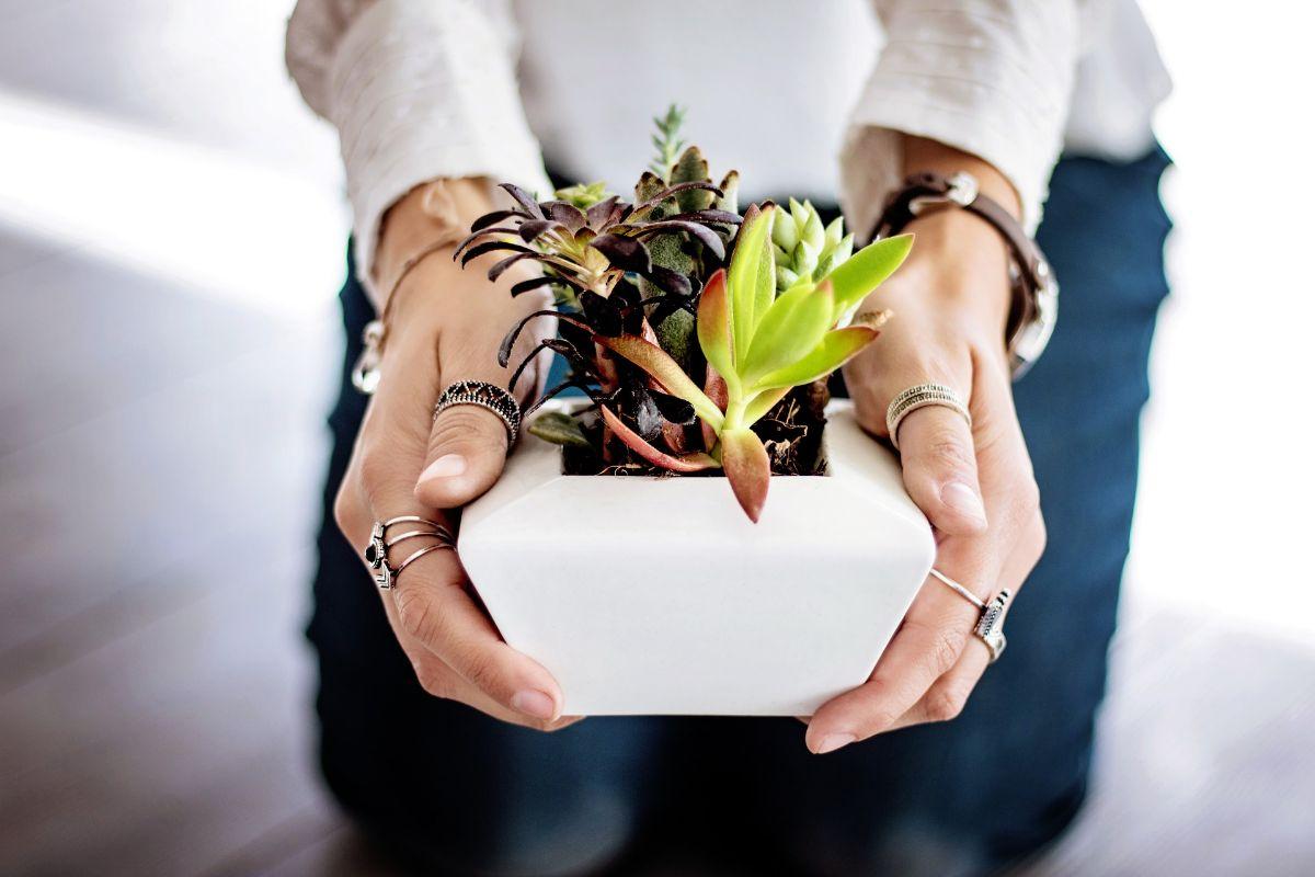 Las enfermedades de las plantas de interior más habituales