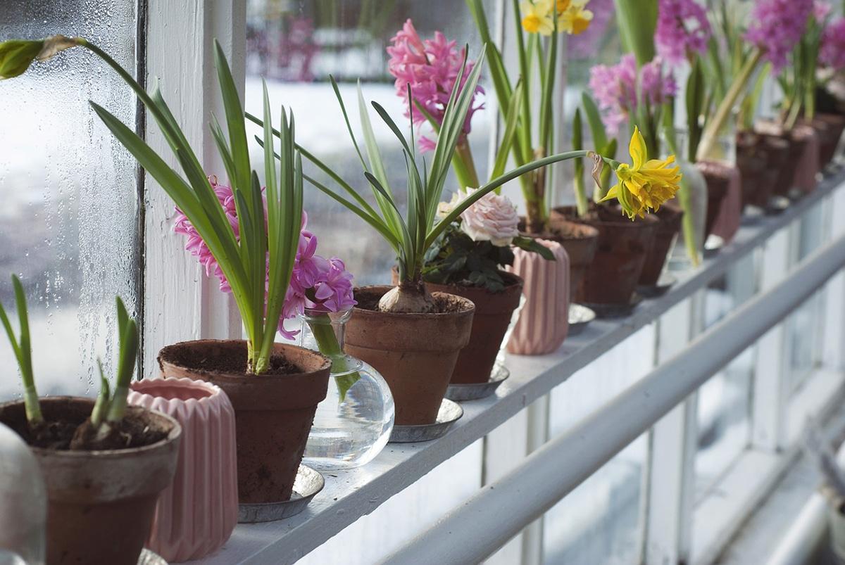 Las plantas con flores y sin flores se diferencian en su forma de reproducirse