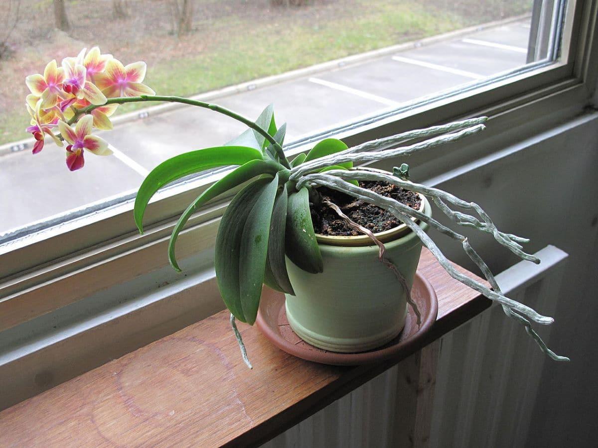 Las plantas se doblan cuando hay una luz más potente
