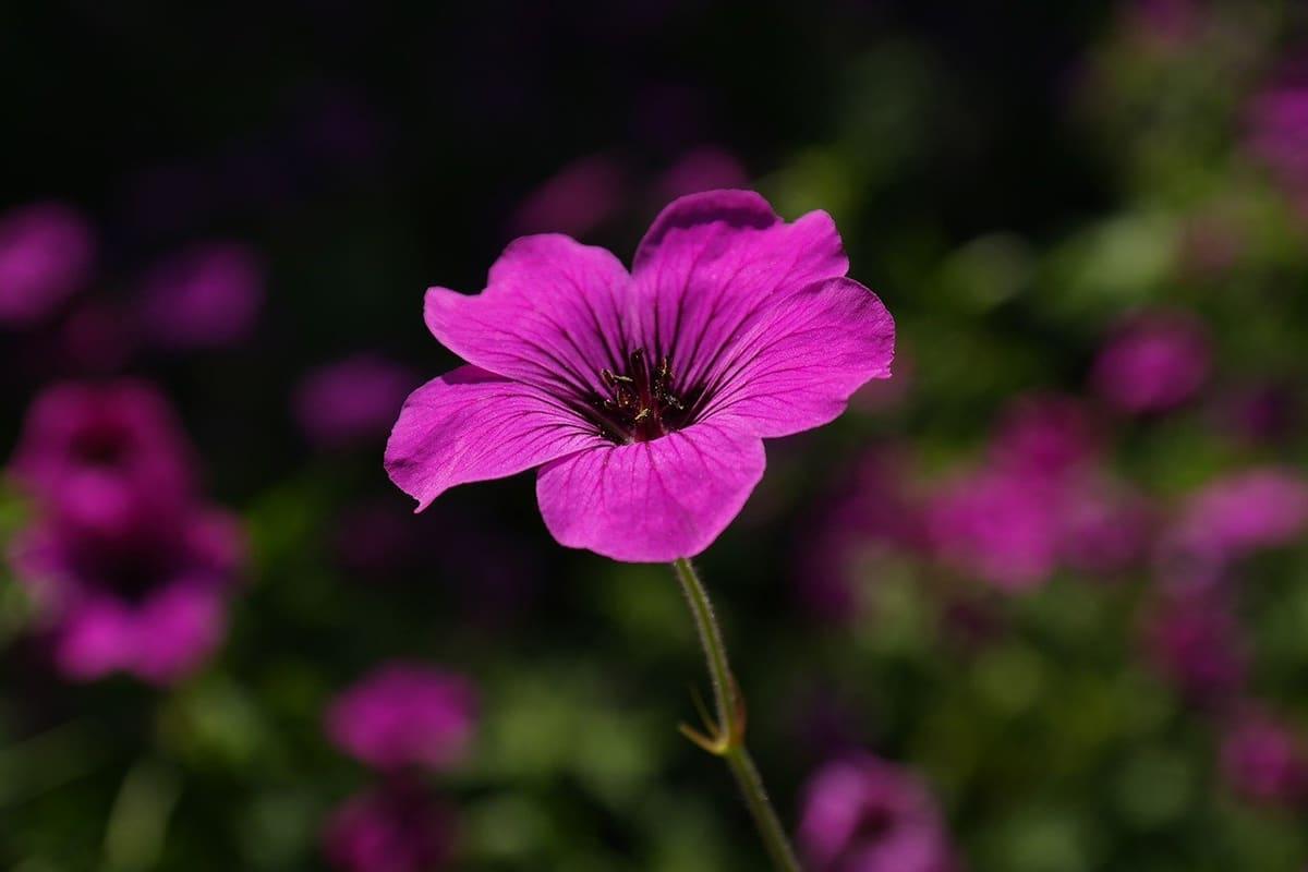 Cada planta requiere unos cuidados específicos