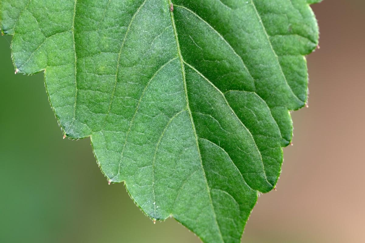 Las plantas reducen la temperatura con la transpiración