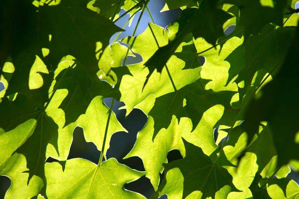 Las plantas realizan la fotosíntesis para crecer