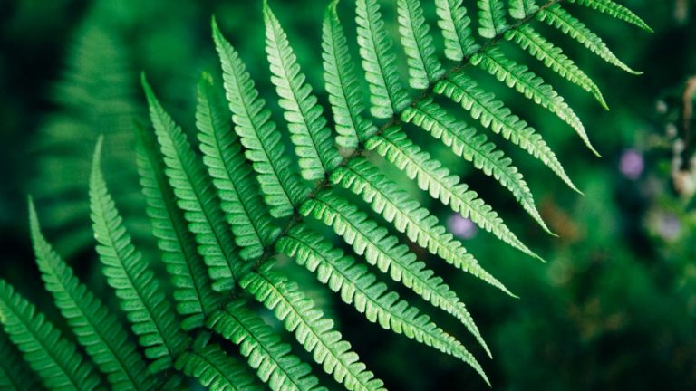 Las plantas pueden ayudar a combatir el calor