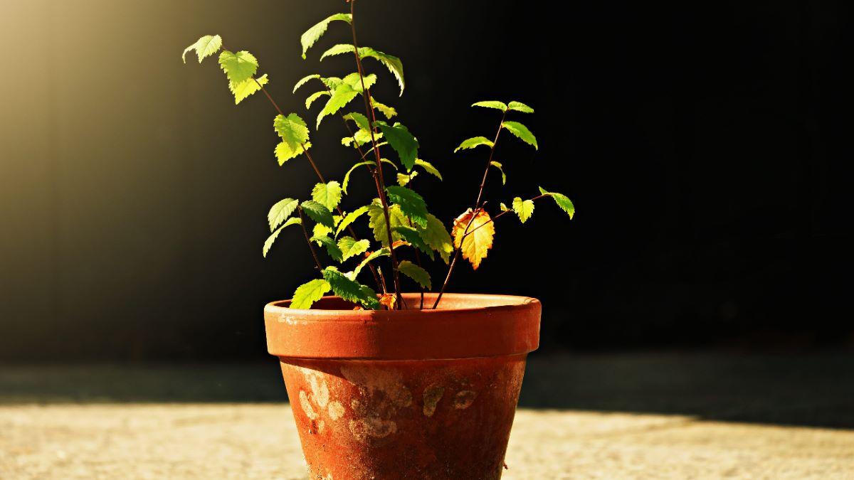 Las plantas pueden sufrir estrés por calor