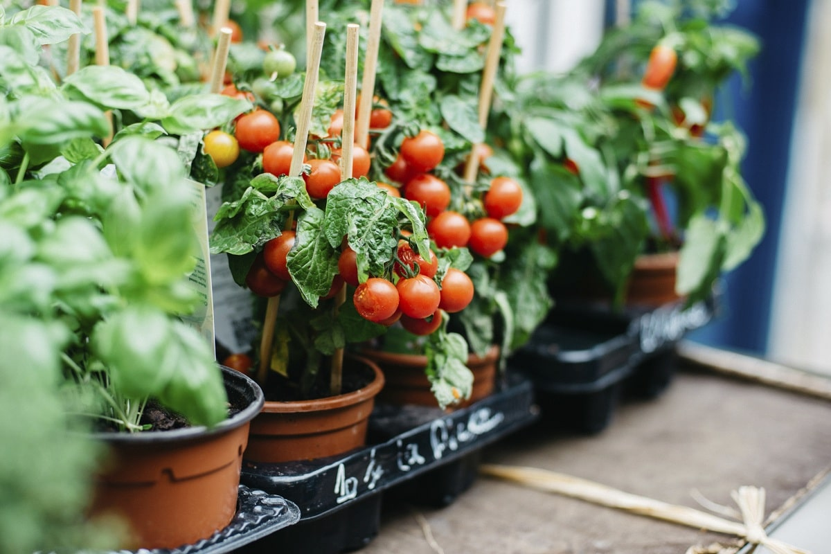 plantar en maceta