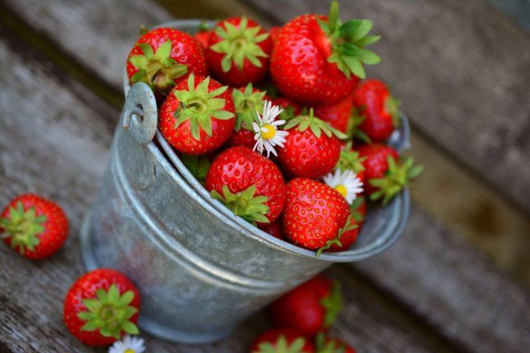 plantar fresas en tubo