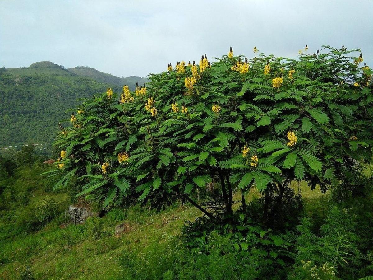 plantas arbustivas